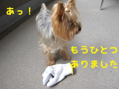 IMG_4453_convert_20111010230843.jpg