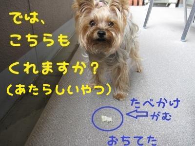 IMG_4460_convert_20111010232841_convert_20111011211620.jpg