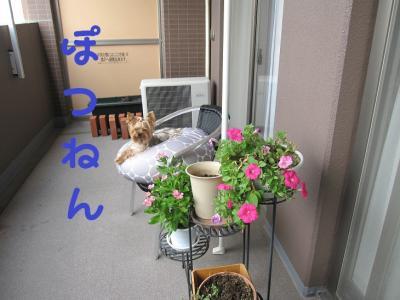 IMG_4464_convert_20111010233815.jpg