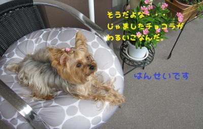 IMG_4466_convert_20111011213028.jpg