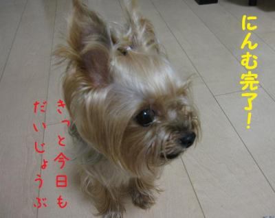 IMG_4534_convert_20111014174051.jpg