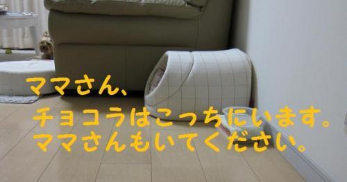 IMG_4554_convert_20111010163834.jpg