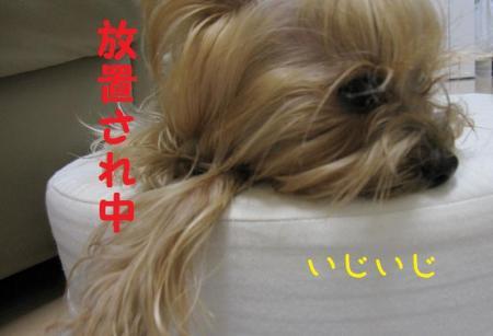 IMG_4574_convert_20111018202325.jpg