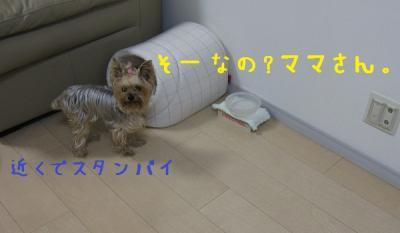IMG_4672_convert_20111022225314.jpg