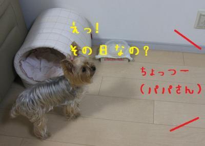 IMG_4673_convert_20111022230512.jpg