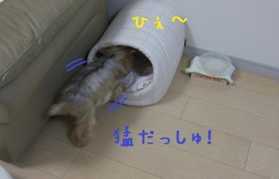 IMG_4674_convert_20111022230823.jpg