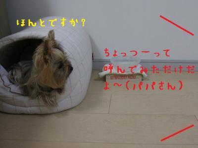 IMG_4680_convert_20111022232022.jpg