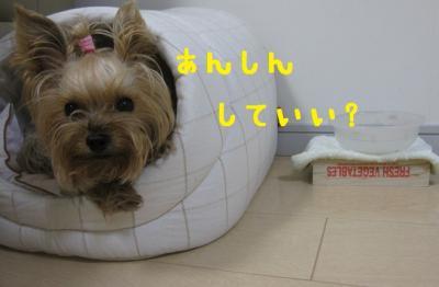 IMG_4703_convert_20111022234635.jpg