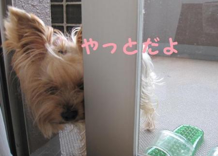 IMG_4856_convert_20111015235206.jpg