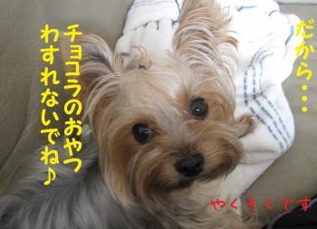 IMG_4864_convert_20111014175741.jpg