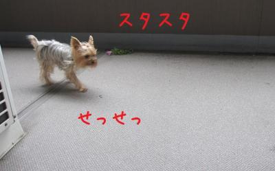 IMG_4884_convert_20111015181027.jpg
