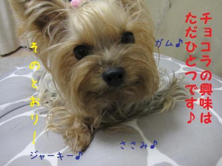 IMG_4986_convert_20111020002425.jpg