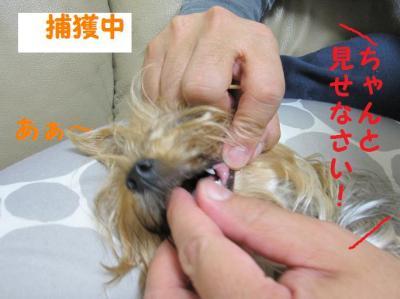 IMG_5042_convert_20111020203419.jpg