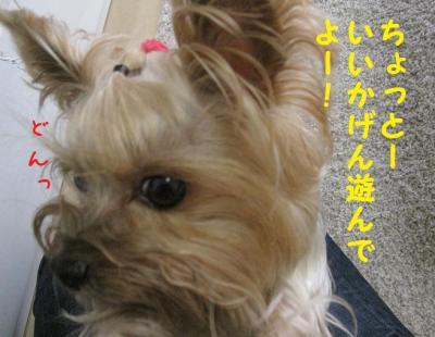 IMG_5136_convert_20111022164233.jpg