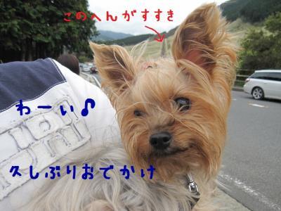 IMG_5169_convert_20111023210352.jpg