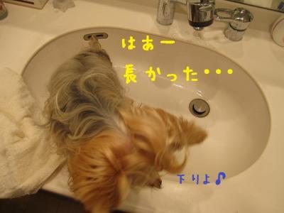 IMG_5250_convert_20111026221127.jpg