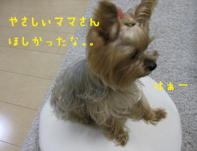 IMG_5270_convert_20111025232542.jpg