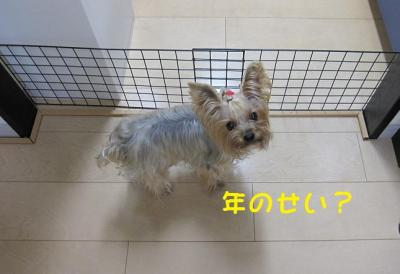 IMG_5360_convert_20111027201257.jpg