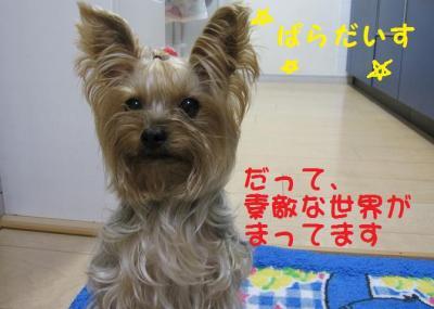 IMG_5367_convert_20111027215612.jpg