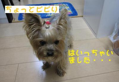 IMG_5378_convert_20111027222458.jpg