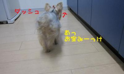 IMG_5380_convert_20111027223713.jpg