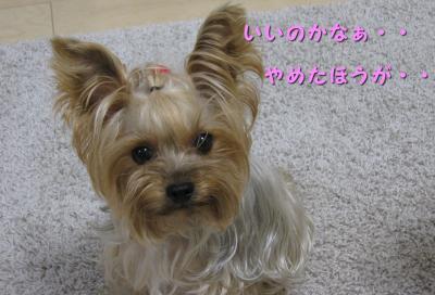 IMG_5438_convert_20111101190610.jpg
