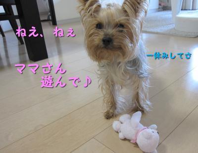 IMG_5486_convert_20111029174753.jpg
