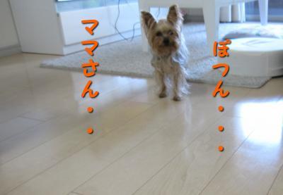 IMG_5497_convert_20111029165218.jpg