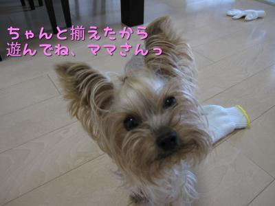 IMG_5540_convert_20111029234408.jpg