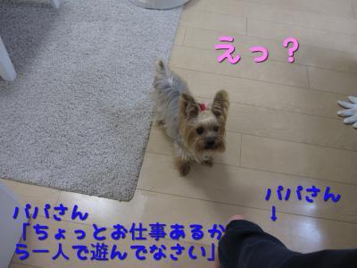 IMG_5955_convert_20111106222734.jpg