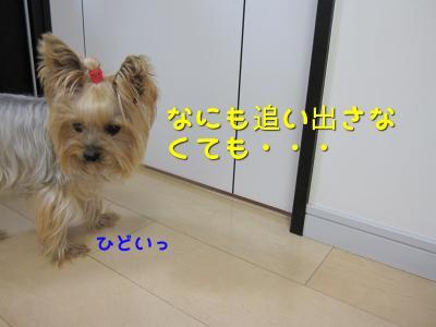 IMG_6022_convert_20111106225129.jpg