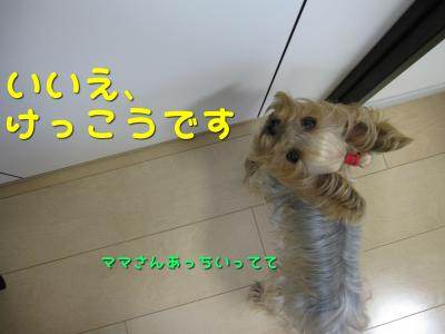 IMG_6029_convert_20111106225953.jpg