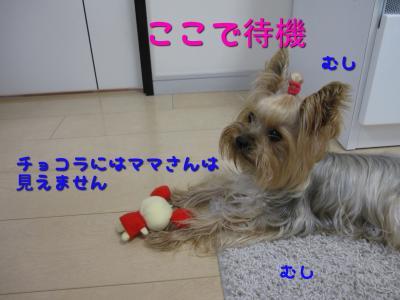 IMG_6037_convert_20111107000838.jpg
