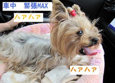 IMG_6095_convert_20111107213026.jpg