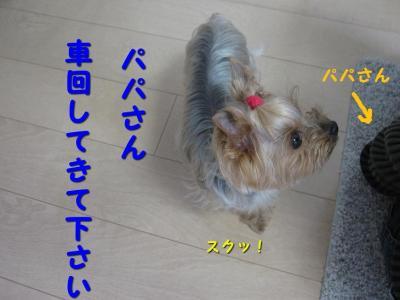 IMG_6700_convert_20111114200040.jpg