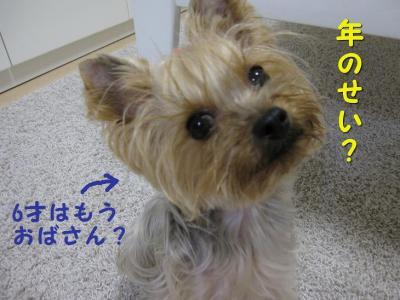 IMG_6731_convert_20111115213437.jpg