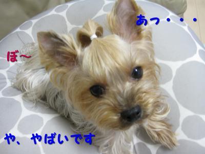IMG_6734_convert_20111115215042.jpg