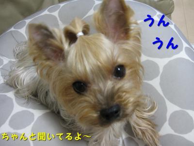 IMG_6735_convert_20111115214519.jpg