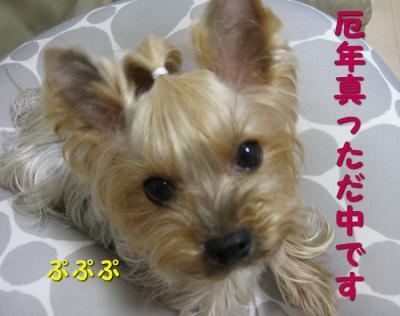 IMG_6735_convert_20111120190409.jpg