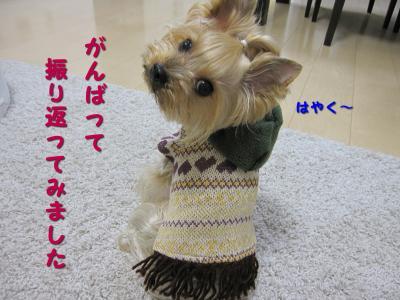 IMG_6784_convert_20111114204328.jpg