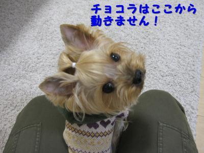 IMG_6798_convert_20111114205857.jpg