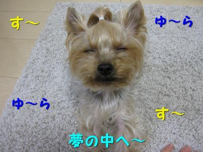 IMG_6838_convert_20111115223351.jpg