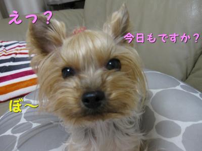 IMG_6860_convert_20111116193828.jpg