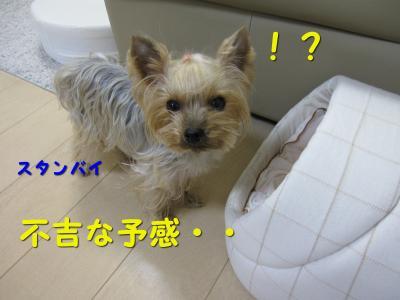 IMG_6943_convert_20111117203351.jpg