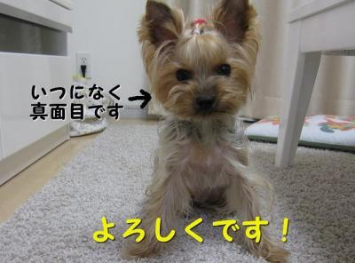 IMG_7036_convert_20111119131758.jpg