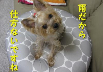 IMG_7065_convert_20111119125740.jpg