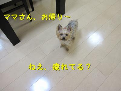 IMG_7082_convert_20111118214632.jpg