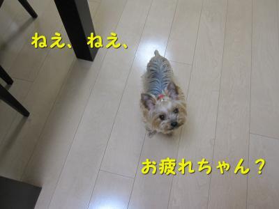 IMG_7083_convert_20111118215646.jpg