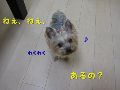 IMG_7086_convert_20111118221010.jpg