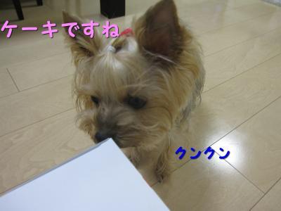 IMG_7121_convert_20111118221747.jpg